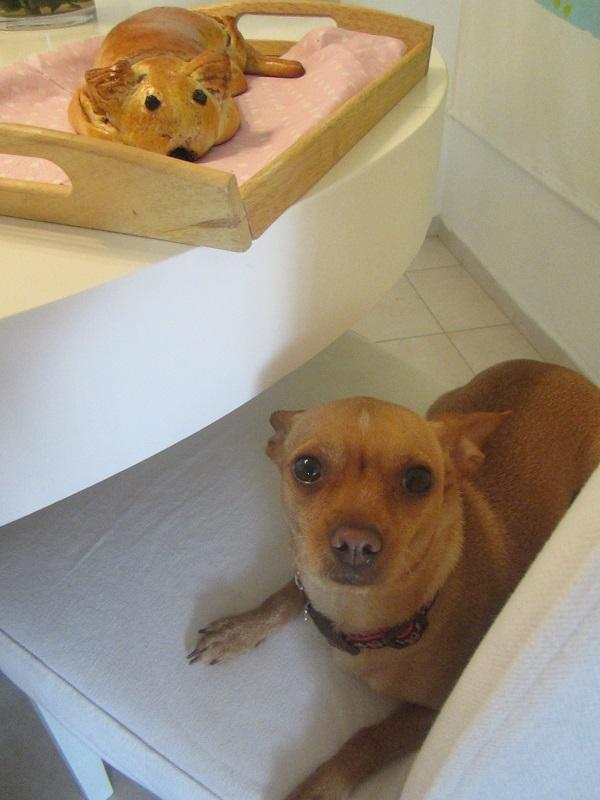 Cinnamon Bun Dogie & Pinchi